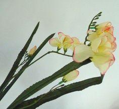 Die 187 Besten Bilder Von Fresien Amazing Flowers Beautiful