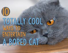 10 Totally Cool Ways to Entertain A Bored Cat | eBay