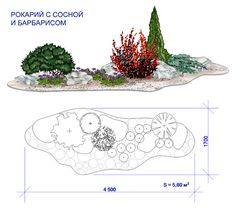 Проект: Клумба «рокарий с сосной и барбарисом» — КЛУМБАshop — MyHome.ru