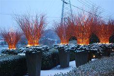Winter 2012 Image Detroit Garden Works