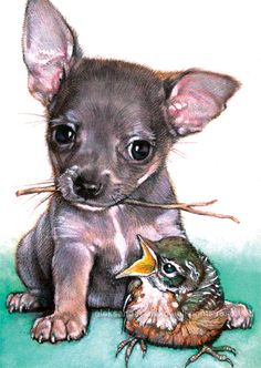 chihuahua baby bird by aleksandar_alexov, via Flickr