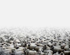 La Romania che non si vede  Gregge di pecore (Silvasu de Sus, Romania occidentale), 2011 © Tamas Dezso, Notes for an Epilogue