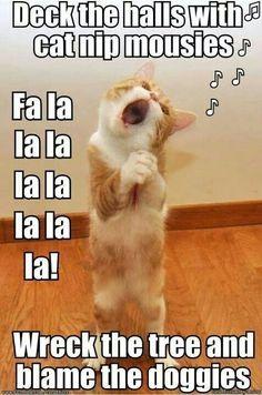 Image result for deck the halls cat meme