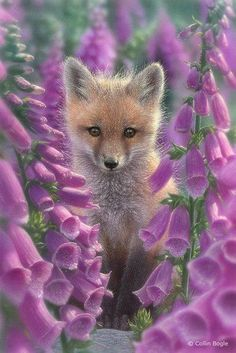 Wildlife Paintings, Wildlife Art Prints by Artist Collin Bogle - are these FOX gloves? Animals And Pets, Baby Animals, Cute Animals, Wildlife Paintings, Wildlife Art, Beautiful Creatures, Animals Beautiful, Cute Fox, Tier Fotos