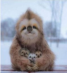 Sloth family #iminlove Funny Animal Images, Cute Animal Photos, Funny Animal Videos, Cute Funny Animals, Animal Memes, Happy Animals, Rare Animals, Jungle Animals, Wild Animals