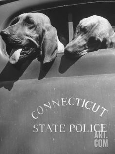 Connecticut State Police Bloodhound Dogs ♡... by StoneArtUSA.com ~ affordable custom pet memorials for everyone.
