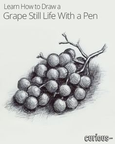 Try your hand at still life drawing with this lesson on how to draw grapes with a pen. Learn how to cross-hatch a sphere and add highlights to a pen drawing.