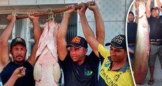 Peixe gigante é pescado em Serra Talhada