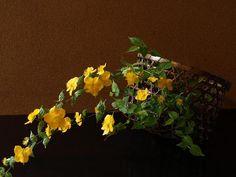 黄色い声//今か今かと待たれたり、人生を重ねて見られる名花には無いホッとする純朴さ。ヤマブキ