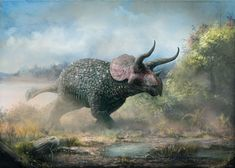 Triceratops horridus. Mark Witton