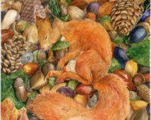 Squirrel sleeping on acorns ,watercolor painted ,digital print