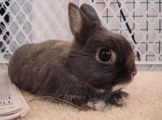 animals, bunny, cute, cute overload, djur, rabbit