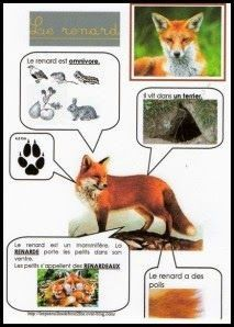 Printable page about le renard Animal Activities For Kids, Science For Kids, Science And Nature, Animals For Kids, French Education, Animal Habitats, Forest School, Montessori Materials, Animal Facts