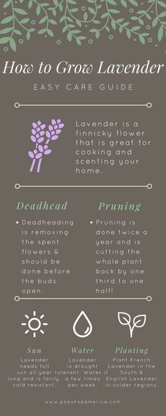 Lavender Care, Growing Lavender, Growing Herbs, Growing Tomatoes, Garden Care, Home Vegetable Garden, Herb Garden, Garden Tips, Garden Plants