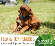 Keep fleas and ticks away with these natural pest repellents and remedies.