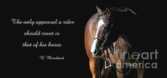 Photo by my favorite horse photographer of her beautiful mare. Love the quote.