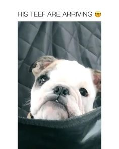 Cute Dogs And Puppies, Baby Dogs, Doggies, Cute Funny Dogs, Cute Funny Animals, Cute Animal Videos, Cute Animal Pictures, Funny Animal Jokes, Animal Memes