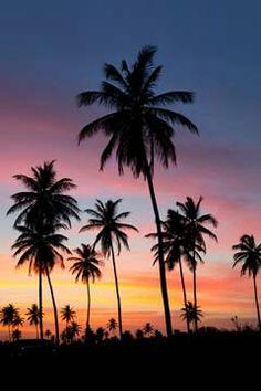 Palm tree's (beach)