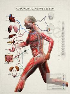 http://ifhp360.com/The_Institute_for_Human_Potential/Products.html