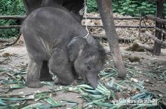 Touching Photos Show An Elephant Family That Was Nearly Torn Apart