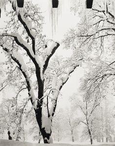 ANSEL ADAMS http://www.widewalls.ch/artist/ansel-adams/ #photography