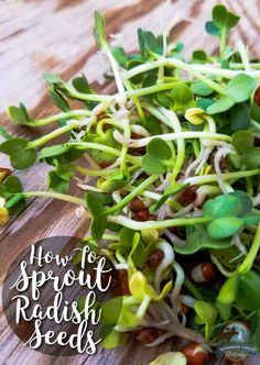 How To Sprout Radish Seeds - Garden Types Radish Sprouts, Alfalfa Sprouts, Growing Sprouts, Growing Vegetables, How To Grow Sprouts, Growing Plants, Organic Recipes, Raw Food Recipes, Ethnic Recipes