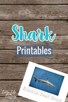 Get ready for shark week with these Shark Printables for Kids - learn to identify 7 different sharks and write their names. Learn the different type of scary sharks that live in our oceans, your ocean lover with love this shark activity. Shark Activities, Printable Activities For Kids, Science Activities For Kids, Preschool Learning, Fun Learning, Animal Activities, Free Printables, Preschool Kindergarten, Teaching