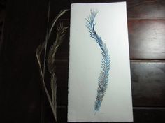 Emu feather on quality sumerset paper. by TheLittleRobin on Etsy