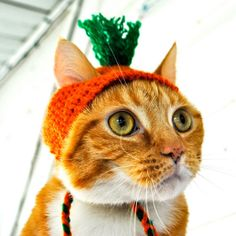 14 Cats Dressed As Thanksgiving - Cosmopolitan