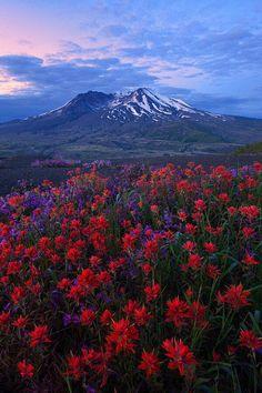Tranquility  ~ Mt.St Helens Washington