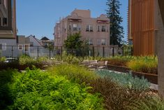 Lakeside Senior Apartments - PGAdesign Senior Apartments, Plant Texture, Community Space, Affordable Housing, Bay Area, Home Projects, Mansions, Landscape, House Styles