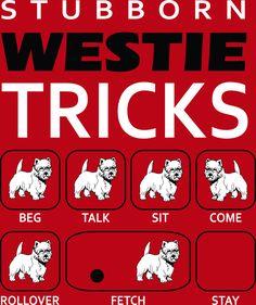 LOL! Cute t-shirt ...Smart, but stubborn!! Lol http://westiesstore.com/products/stubborn-westie-tricks