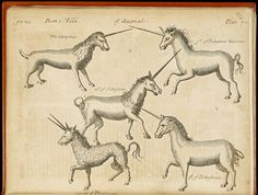 These Real, Magical Texts Are Straight Out Of 'Harry Potter' Louis Xiv, Harry Potter, British Library, World History Facts, Unicorn Tapestries, Unicorn Illustration, Animal Skeletons, Legendary Creature, Unicorn Art