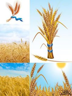 Wheat photos and illustrations Пшеница Farm Tattoo, Diy And Crafts, Crafts For Kids, Fruit Of The Spirit, Ova, Art For Kids, Mandala, Clip Art, Stamp