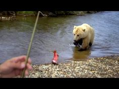 Grizzly Bear Takes Jeremy Wade's Salmon - River Monsters - YouTube
