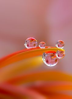 "coiour-my-world: """"Make up flower"" ~ by Miki Asai "" FabFotoFinds"
