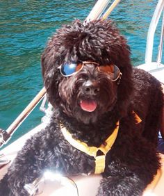 We want to help you bring your cat or dog on vacation to Lake Havasu!  Lake Havasu looks like a really fun place to bring a pet. Getting out onto the water is what it is all about - boating, fishing. Take a look at this dog having fun in the water!   http://www.petfriendlyhavasu.com/