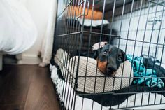 Crate Training Your Puppy – Effectively (in 2021)