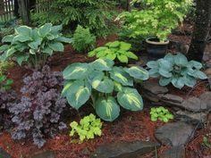 contrasting shade garden ideas