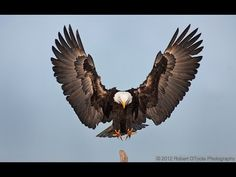 BIBLICALRESEARCHLABS Two Wings of a Great Eagle