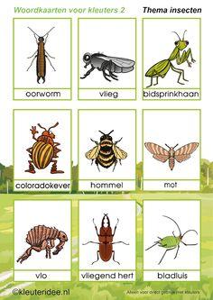 Woordkaarten 2 voor kleuters, thema insecten, kleuteridee, free printable.