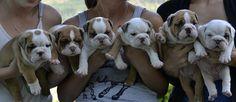 nr 4 fra venstre flytter snart inn her - one of these is mine, no 4 from left