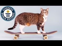 Rescue Cat Didga Shows Up The World By Holding Guinness World Record For Most Tricks In A Minute – iHeartCats.com – All Cats Matter ™