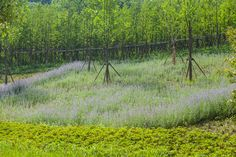 TangshanGeoparkMuseum_HASSELL_JohnsonLin_08 « Landscape Architecture Works | Landezine