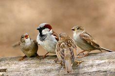 Small Birds, Colorful Birds, Little Birds, Animals And Pets, Cute Animals, Brown Bird, Winter Scenery, Bird Pictures, Watercolor Bird