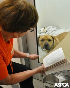 A volunteer reads to a dog as part of our Storytelling Program, an initiative designed specifically to socialize victimized dogs brought in through the ASPCA's partnership with the NYPD. A soothing voice and presence can calm agitated or fearful dogs, which helps them more easily transition to our Adoption Center and eventually find homes. http://www.aspca.org/news/aspca-storytelling-program-helps-traumatized-dogs-heal
