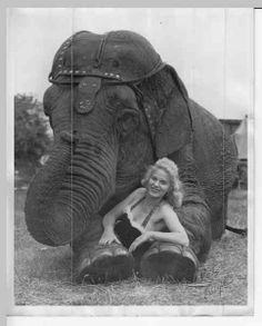 Black and white very large prints can be made at kinkos for virtually no cost. Placed around parking lot retro poster style. Circus Pictures, Retro Pictures, Elephant World, African Elephant, Circus Photography, Old Circus, Vintage Circus Posters, Sideshow Freaks, Sagittarius Moon