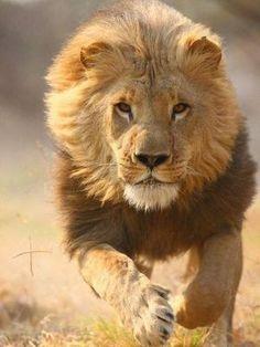 Caçadores de Leões | Pregações e Estudos Bíblicos