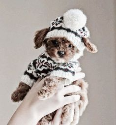 Content filed under the Dog Clothes taxonomy. Baby Puppies, Cute Puppies, Cute Dogs, Dogs And Puppies, Doggies, Puppies Stuff, Dog Stuff, Fluffy Animals, Cute Baby Animals