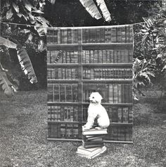 Biblio Dog. Photograph by Kenneth Josephson